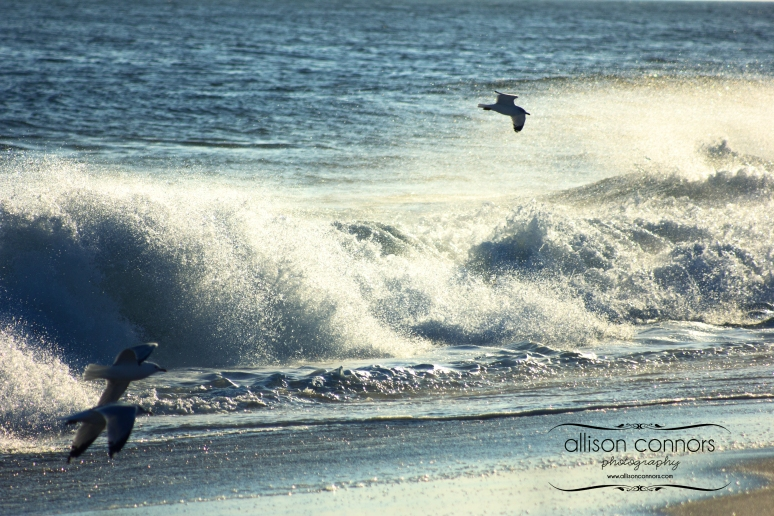 Seaguls_in_Surf_Web