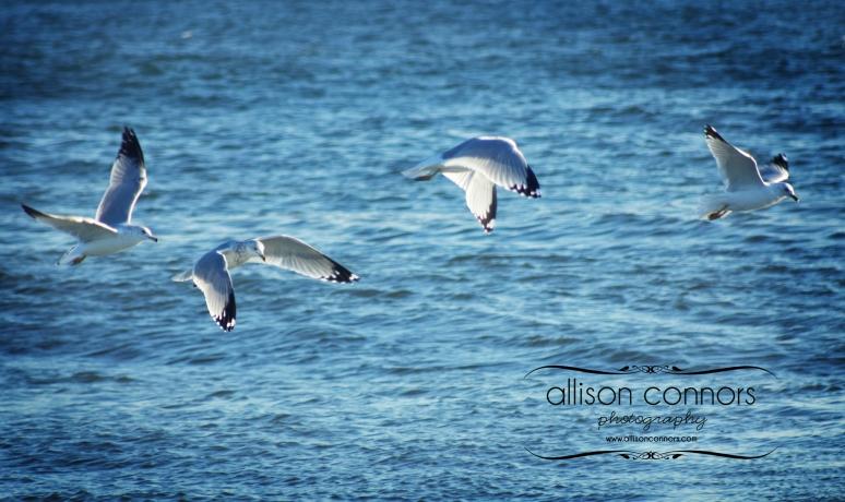 Seaguls_Web